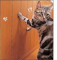 ペット用腰壁 住宅リフォーム